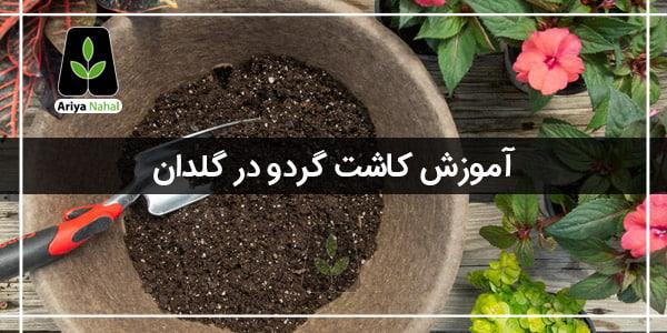 آموزش کاشت گردو در گلدان