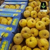 خرید نهال به اصفهان