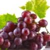 نهال انگور رد گلوب