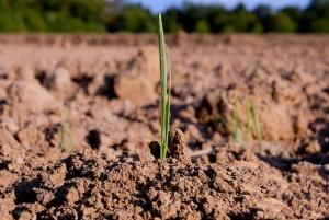 خاک حاصل خیز جهت کاشت نهال زرشک سیاه