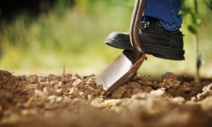 حاصل خیزی خاک