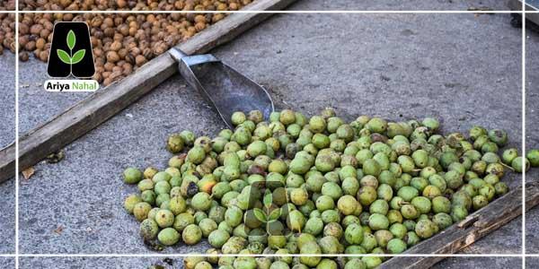 باردهی درخت گردو تویسرکان، در ایران بسیار مناسب می باشد.