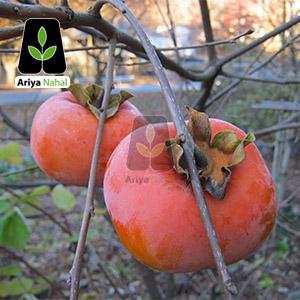 خرمالو سیبی