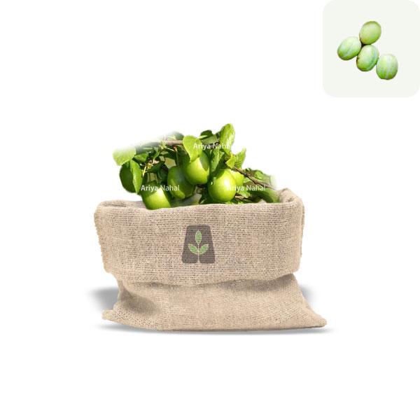نهال گوجه سبز ملایر