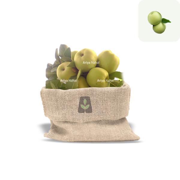 نهال سیب اهر