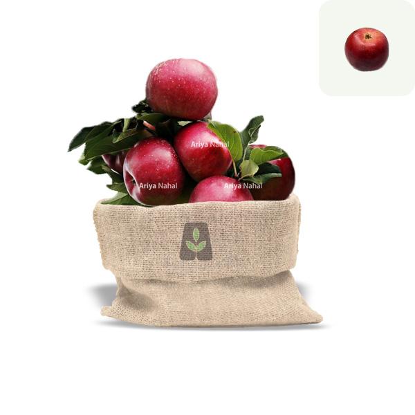نهال سیب برابورن