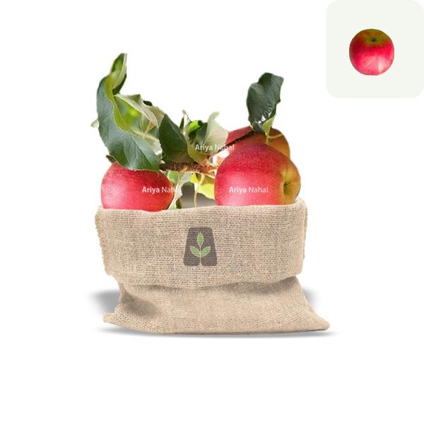 نهال سیب جوناگلد
