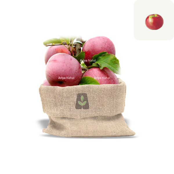 نهال سیب خراسان