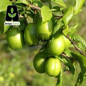 گوجه سبز ملایر