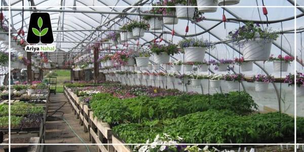 نکات مهم جهت احداث باغ گردو