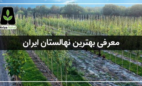 معرفی بهترین نهالستان ایران