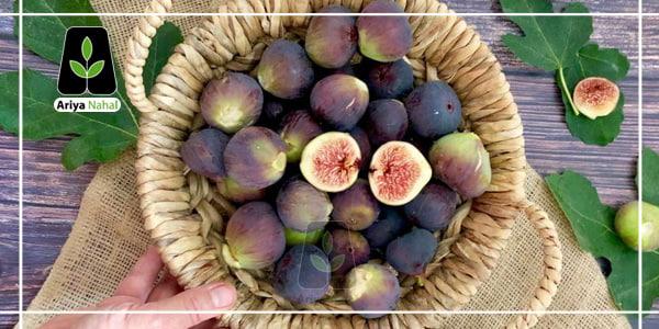 میوه ی انجیر