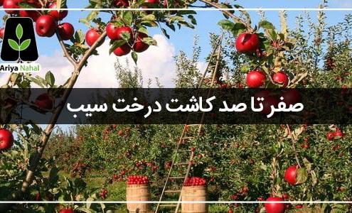 کاشت درخت سیب
