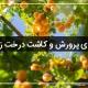 کاشت درخت زردالو