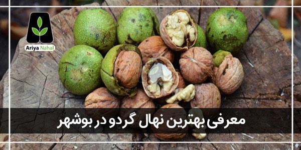 بهترین نهال گردو در بوشهر