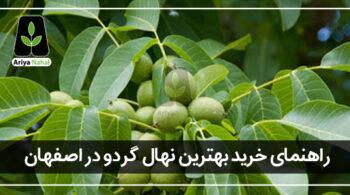 بهترین نهال گردو برای اصفهان
