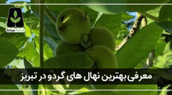 بهترین نهال گردو در تبریز
