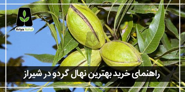 بهترین نهال گردو در شیراز